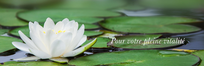 lotus-yoga-1